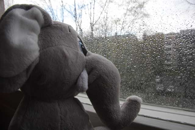 elephant toy at a window