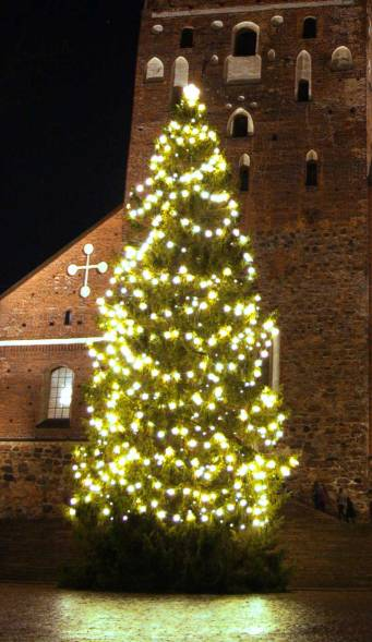 big Christmas tree with lights