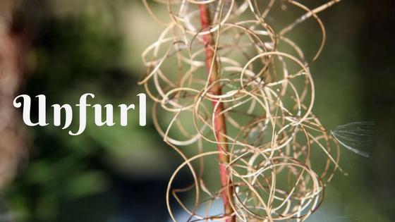 unfurl flower