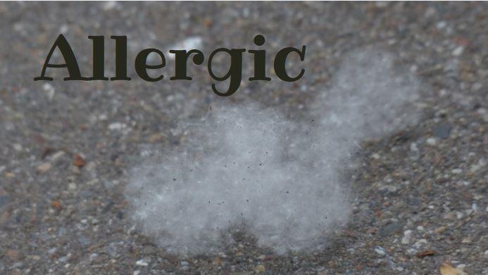 dust on tarmac