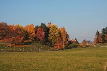 colorful trees from afar